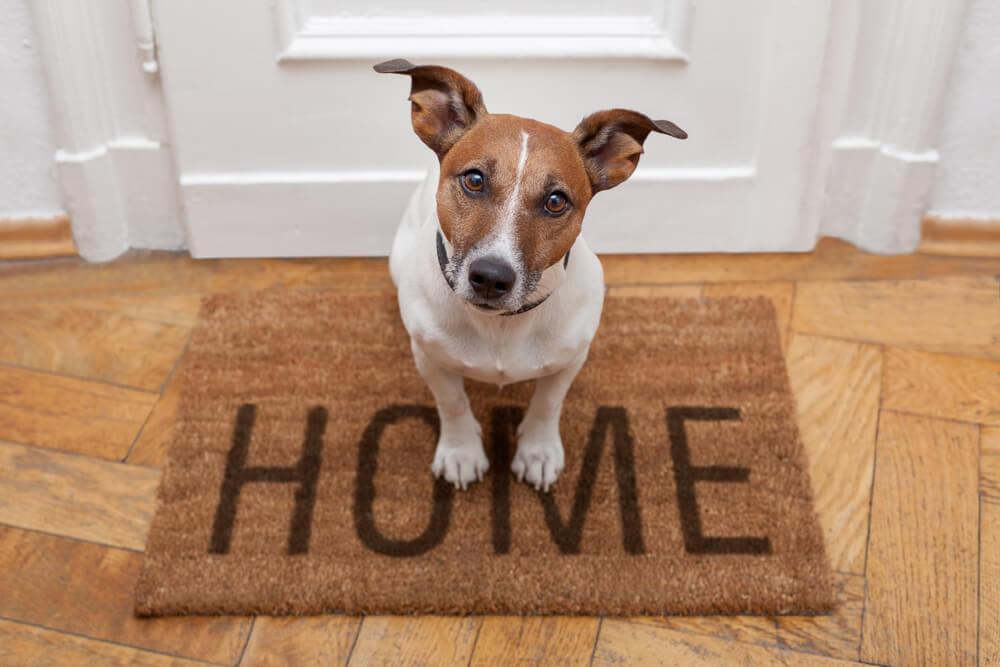 4 dicas para uma boa convivência entre pet e vizinhos